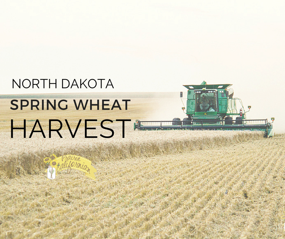 North Dakota Spring Wheat Harvest