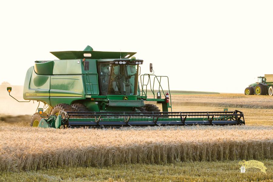 Wheat Harvest 2014-2