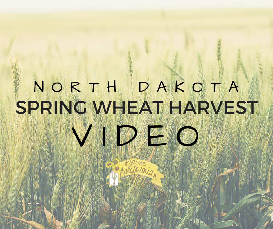 North Dakota Spring Wheat Harvest Video