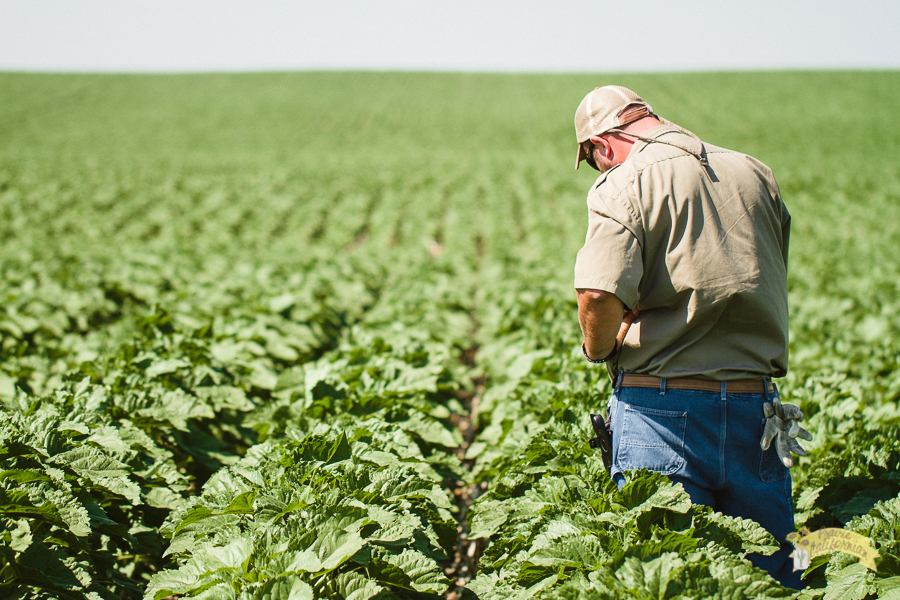 July Crops 2014-30