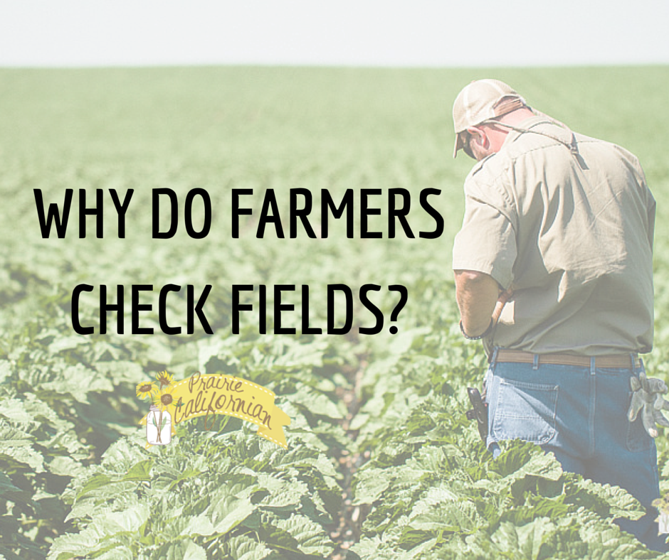 Why Do Farmers Check Fields-