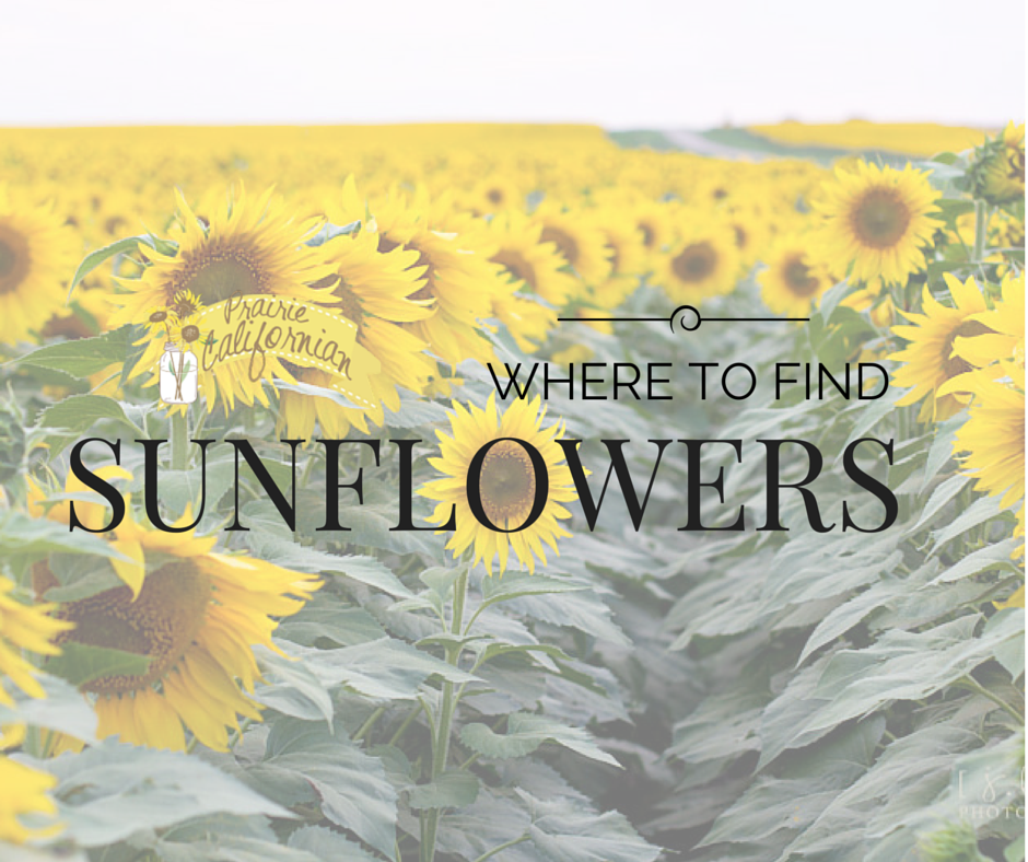 Where to Find Sunflowers