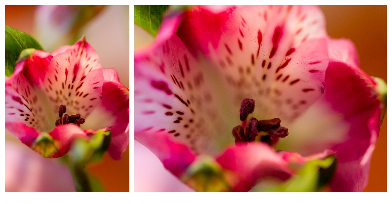 if you follow my photography, you will find I LOVE macro photography.. especially flowers
