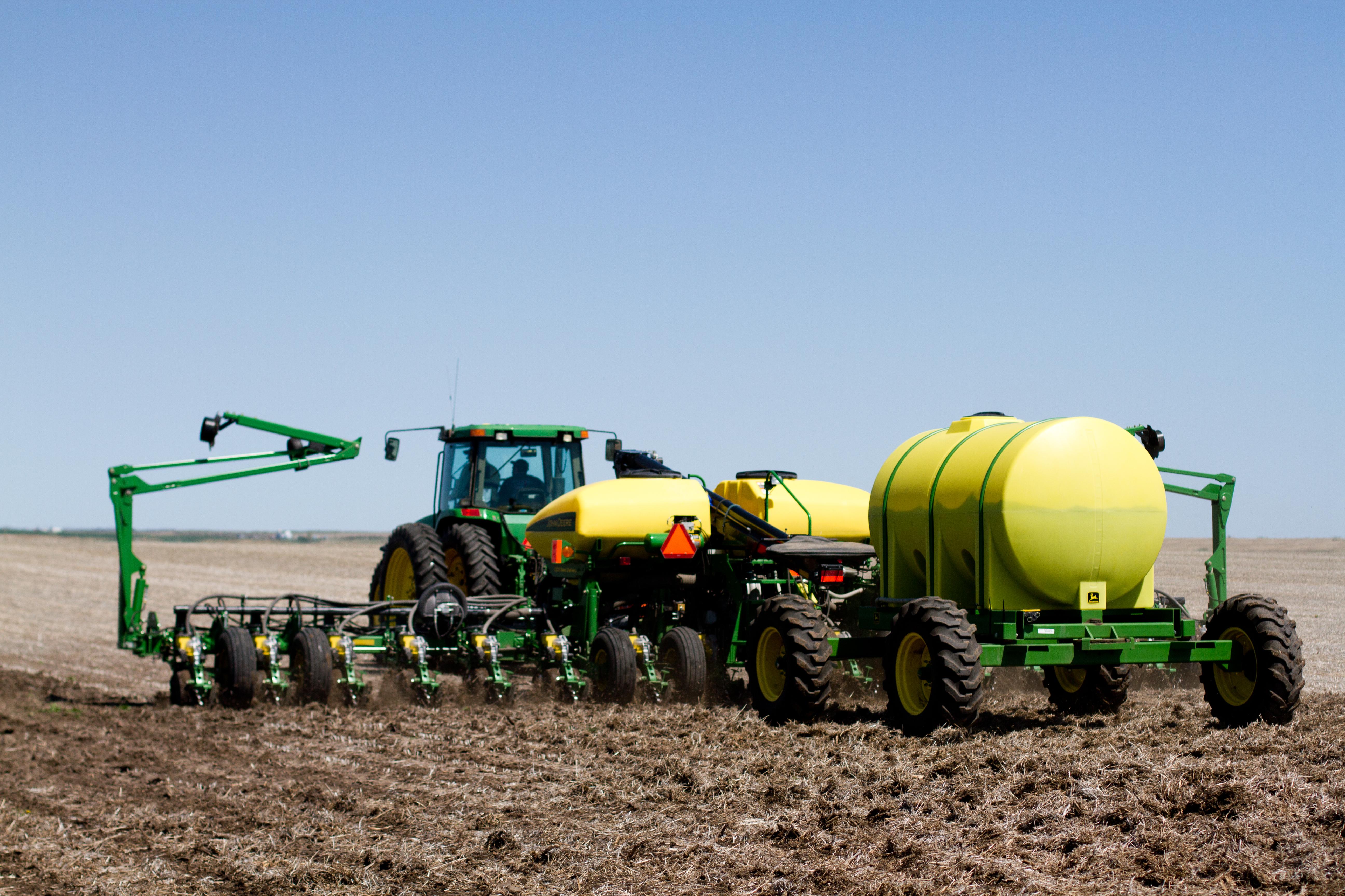 Corn Plant-16