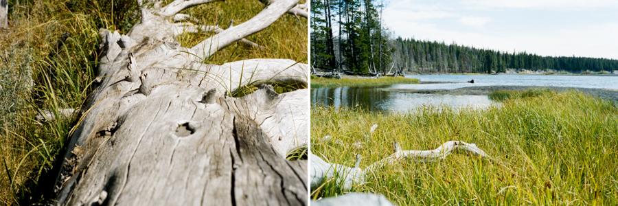 Yellowstone Blog-6