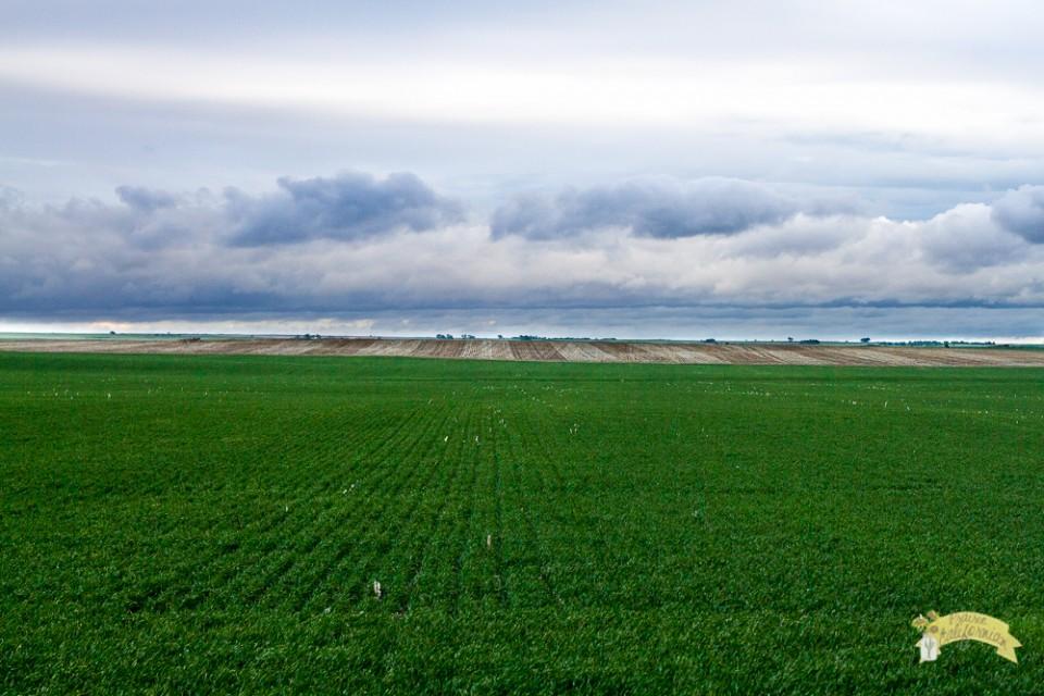 Crops 2014-9