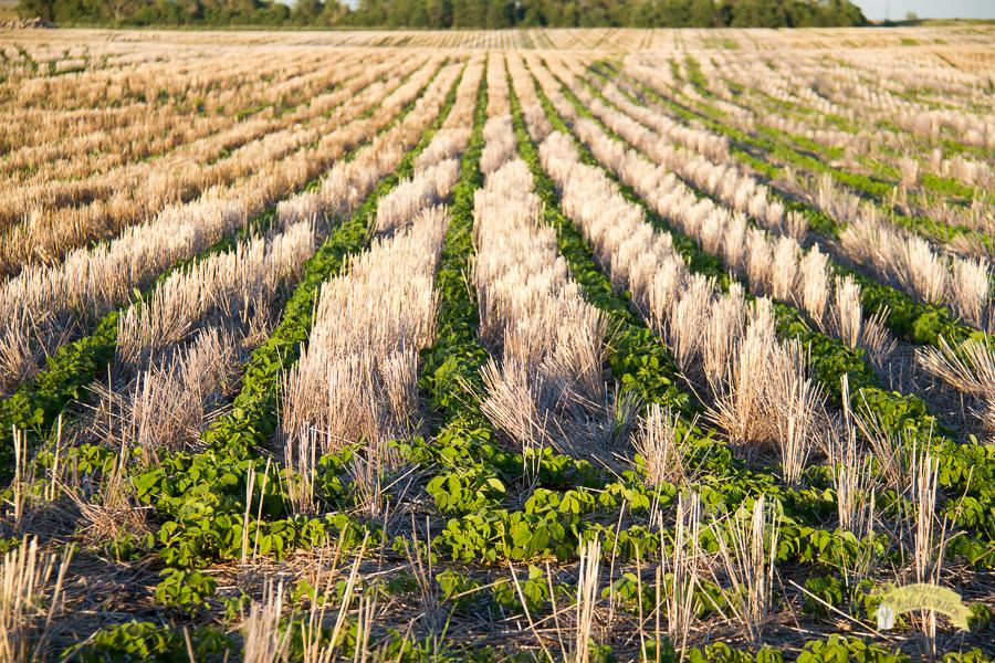 July Crops 2014-12