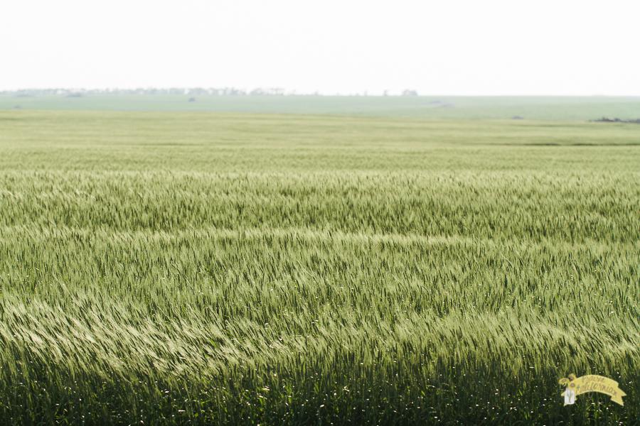July Crops 2014-38