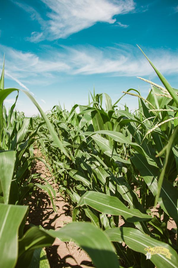 July Crops 2014-53