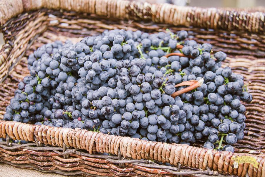 Bogle Vineyards-7