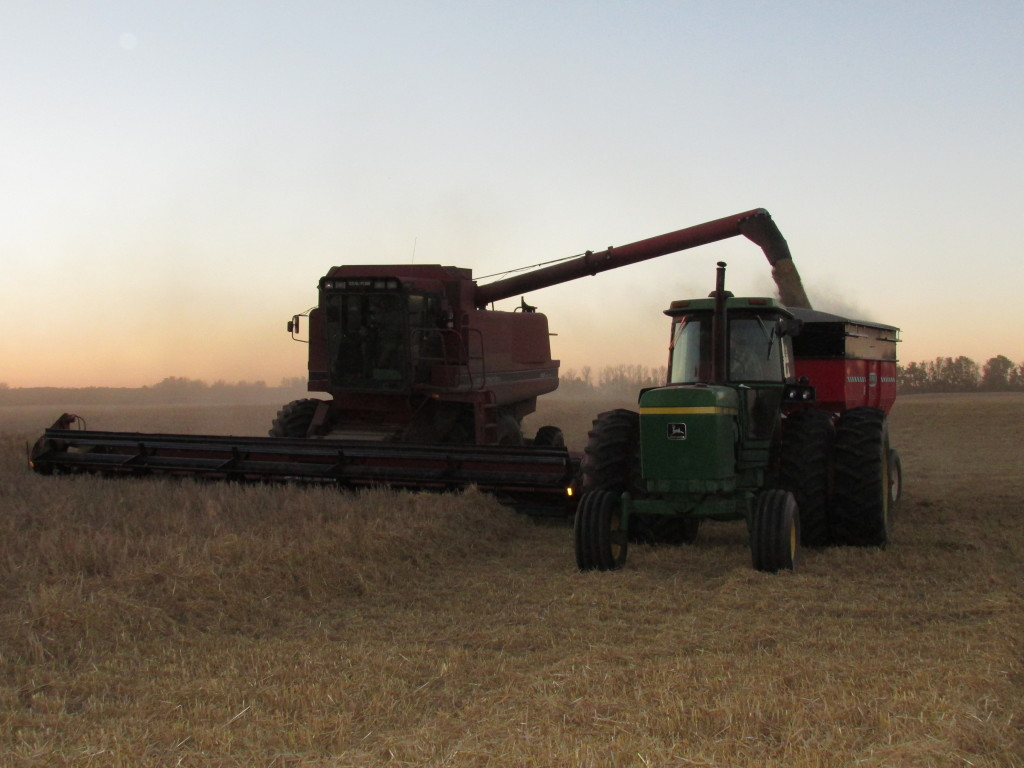 Charlotte Schwanke - 2014 - combining barley