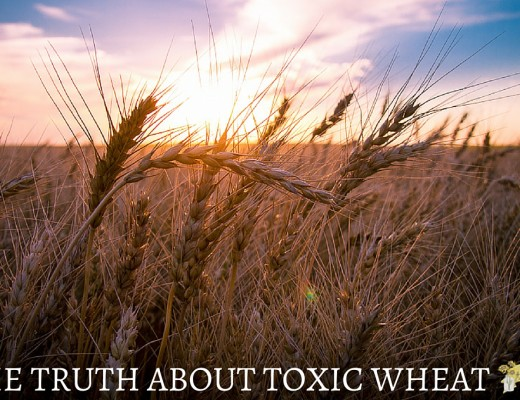 The Truth About Toxic Wheat