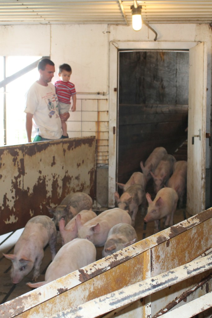 Val Plagge - 8.15.13 New Load of Pigs - Ian and Klayton