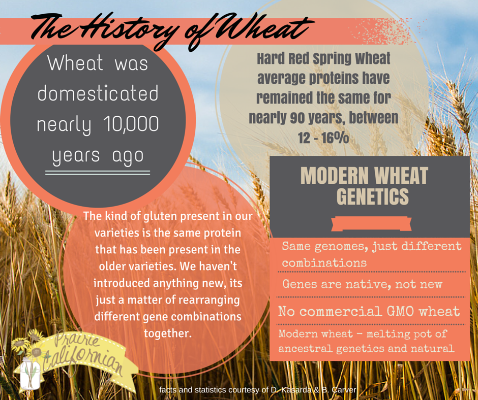 The History of Wheat (2)