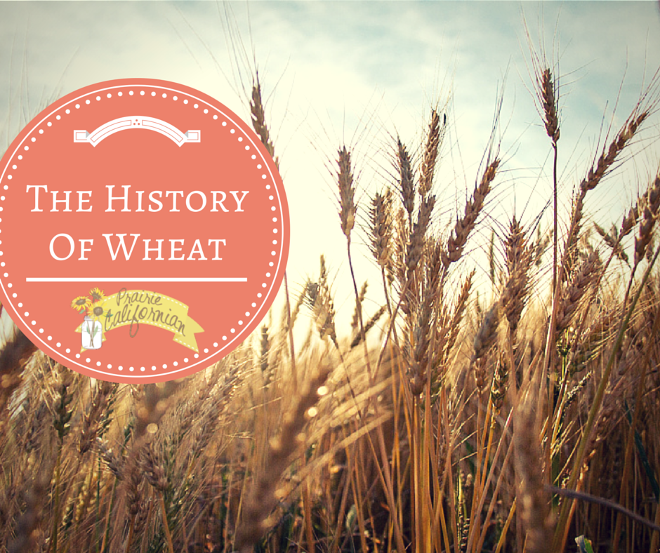 The History of Wheat