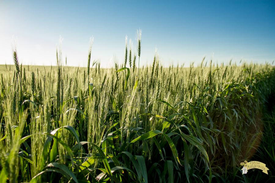 July Crops 2014-5