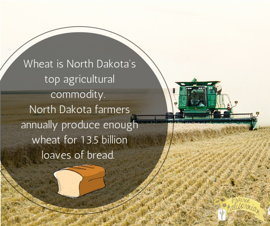Wheat in North Dakota 1