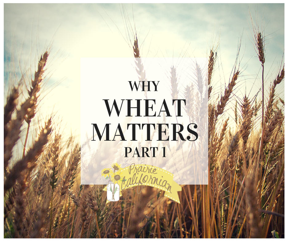 Why Wheat Matters Part 1