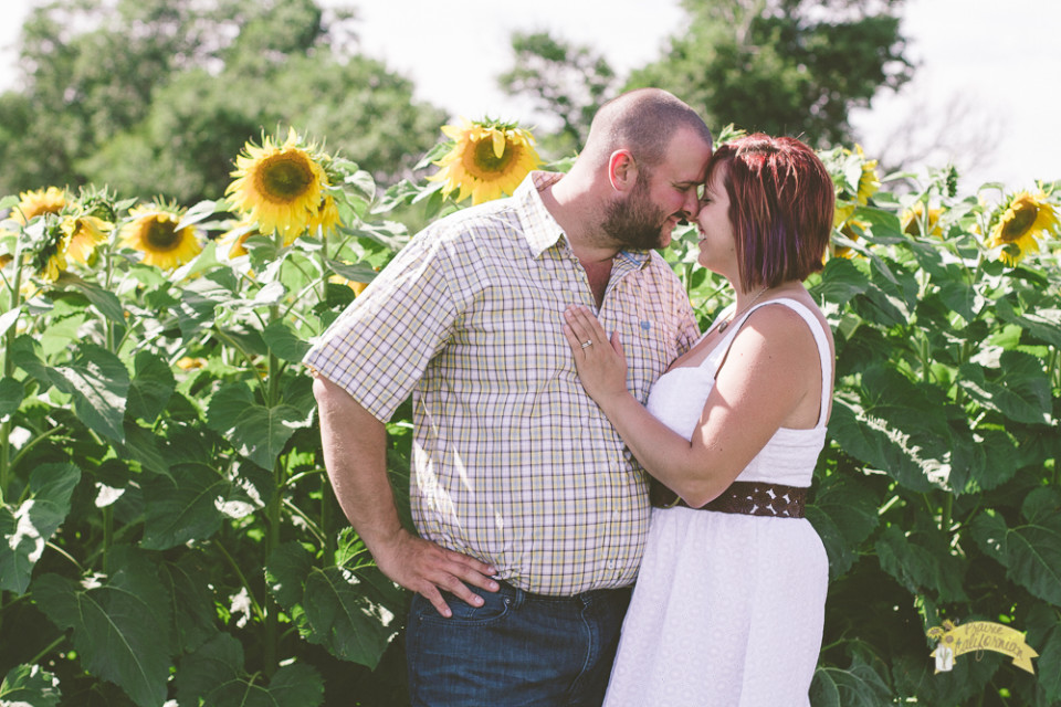 Mark and Jenny Sunflowers-3