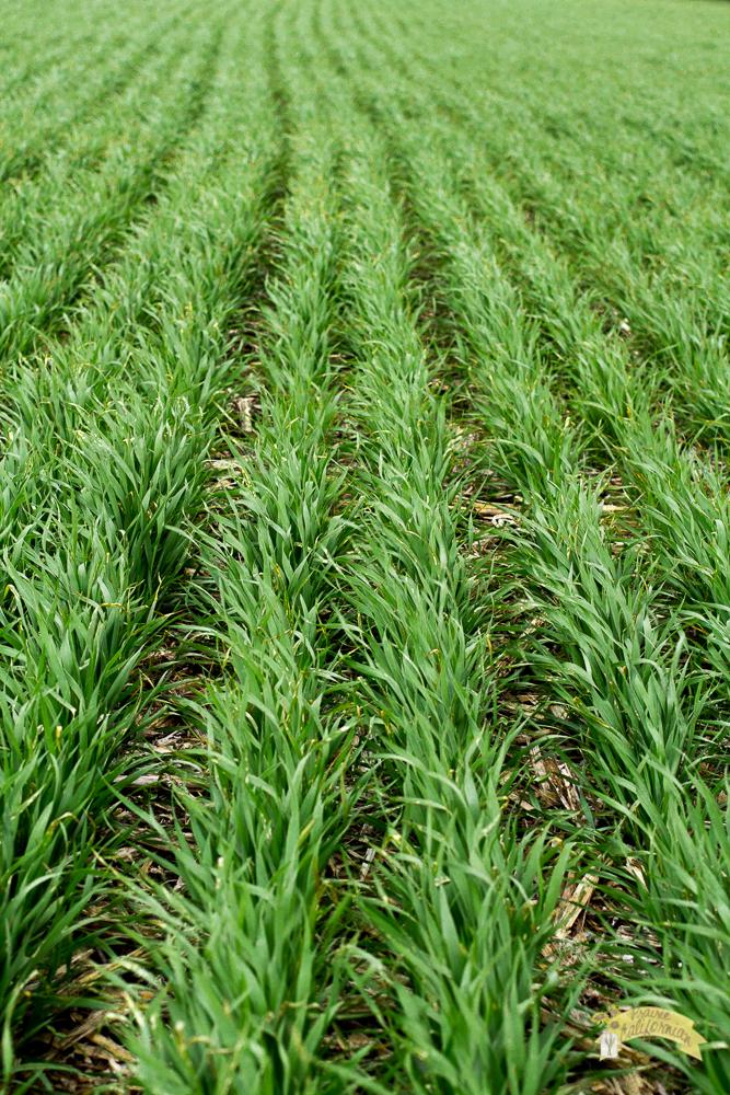 Crops 2014 original-8