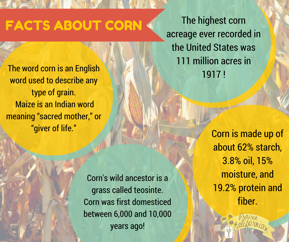 Facts about corn
