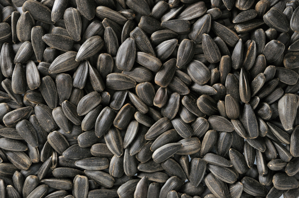 sunflower oilseeds