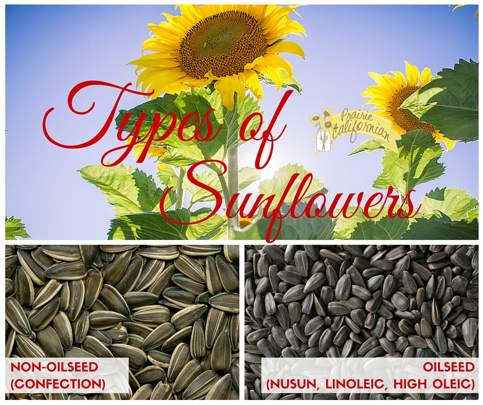Types of Sunflowers