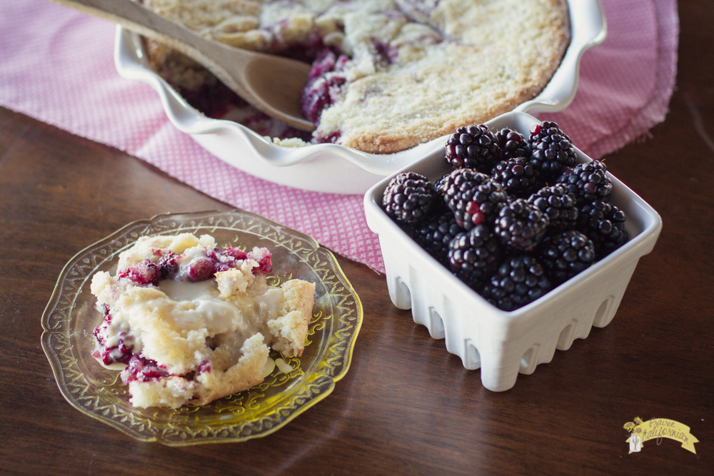 Blackberry Buckle featuring KV Farms Inc.