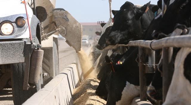 Cattle EMpire 6