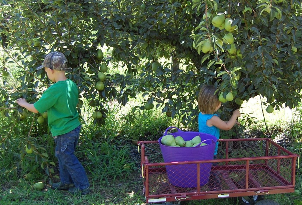 Double M Farms upick kids  (1)