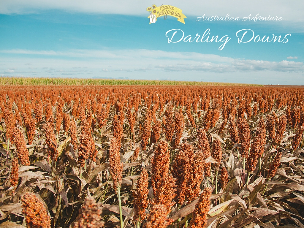 Australian Adventure Darling Downs - Prairie Californian