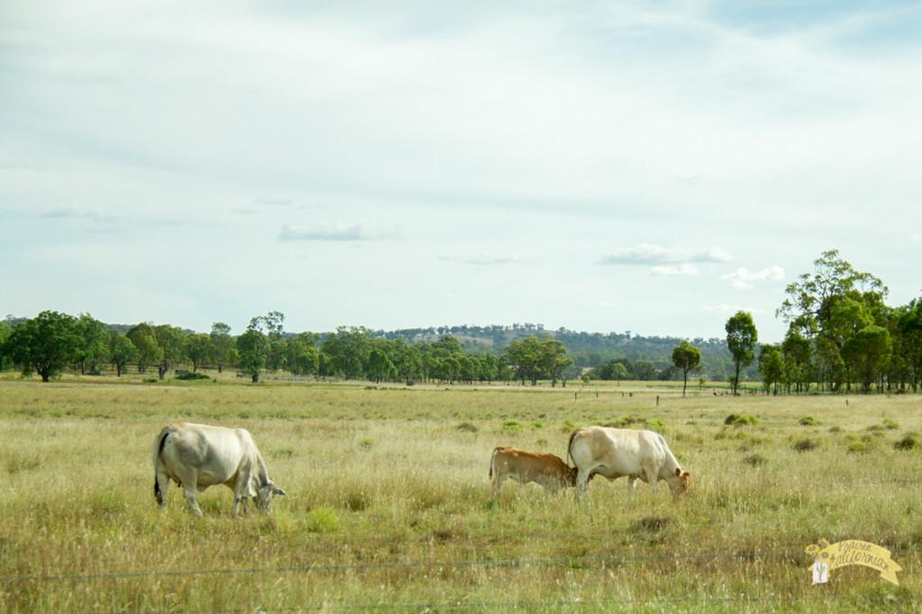 Inland & Farming-13