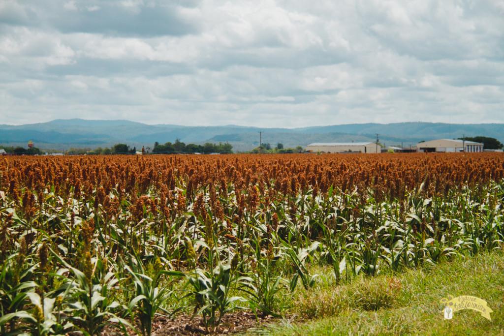 Inland & Farming-3