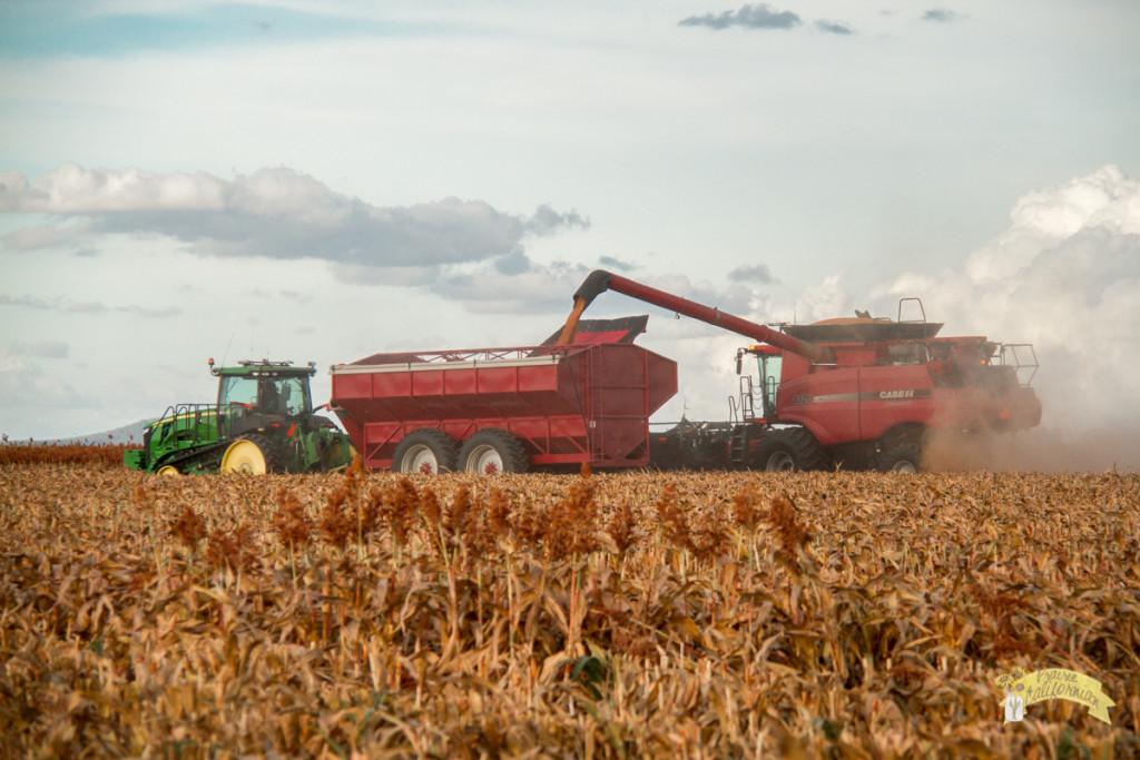 Inland & Farming-37