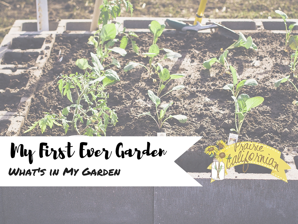 My First Ever Garden: What's in My Garden