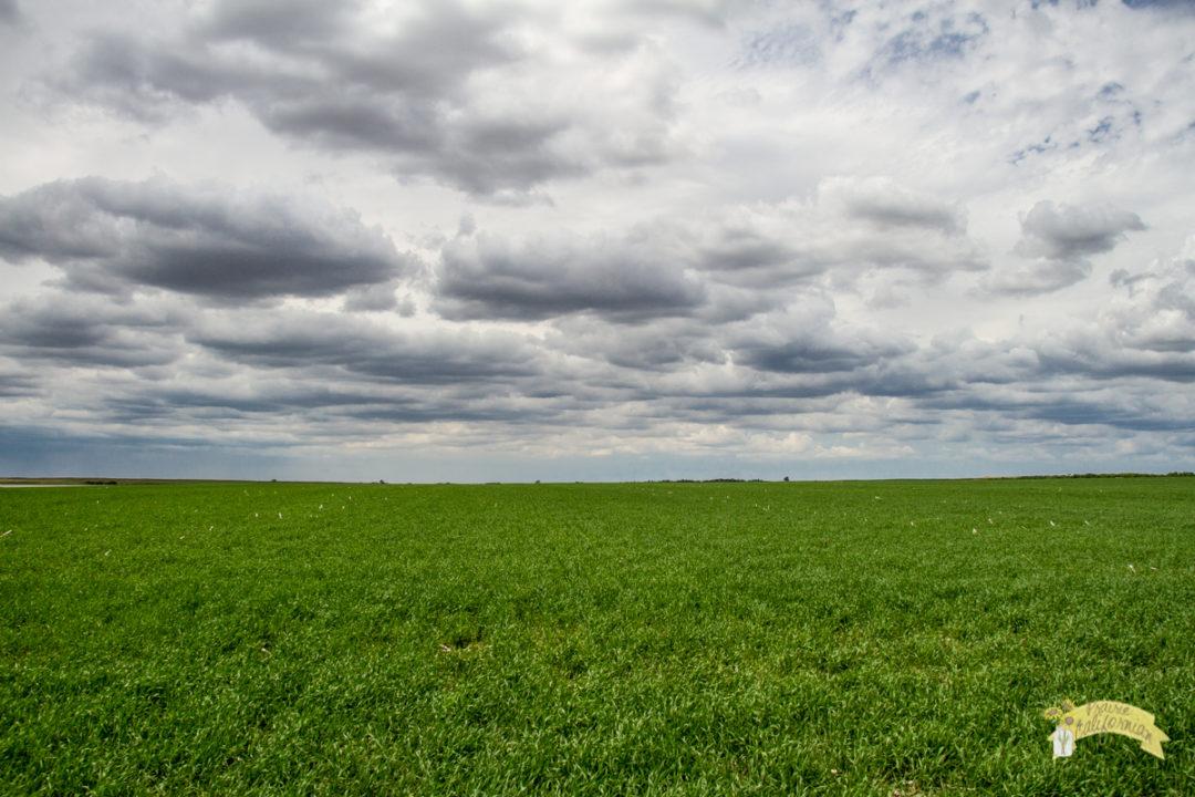 Crops 2016-7