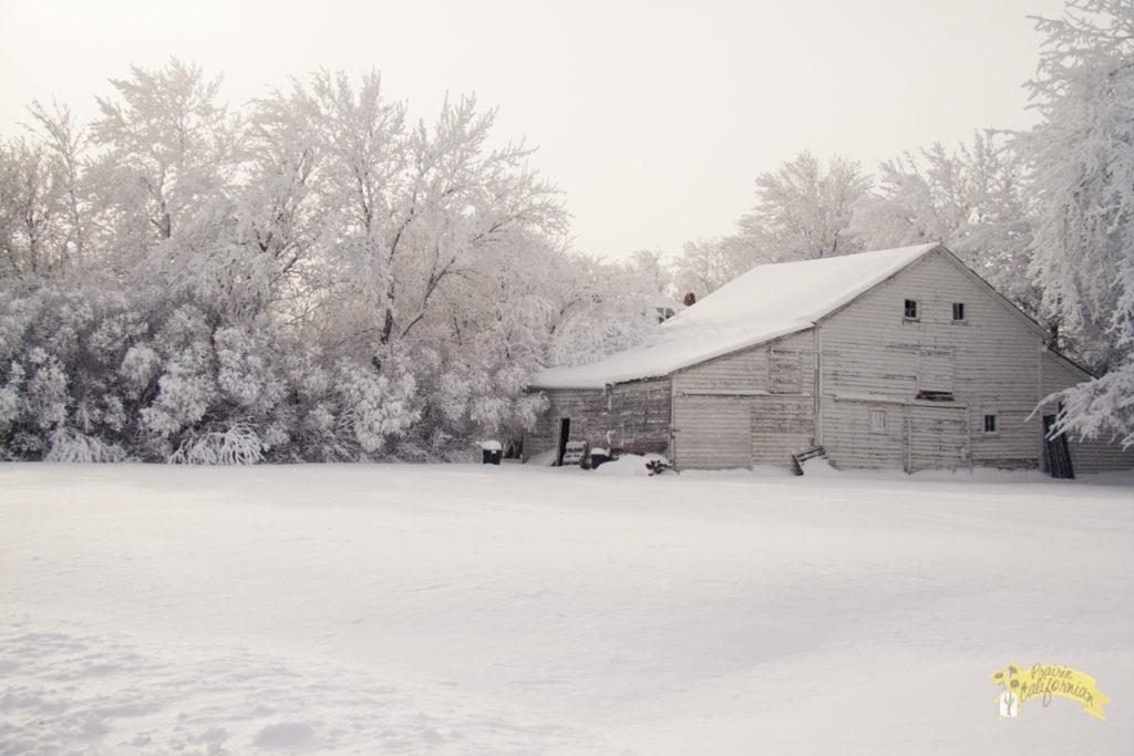 Winter Frost-2