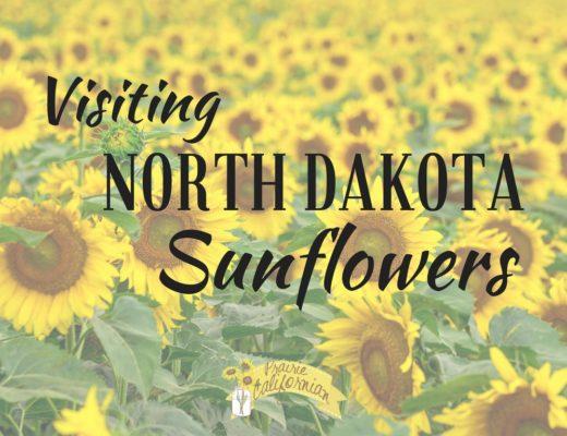 Visiting North Dakota Sunflowers - Prairie Californian