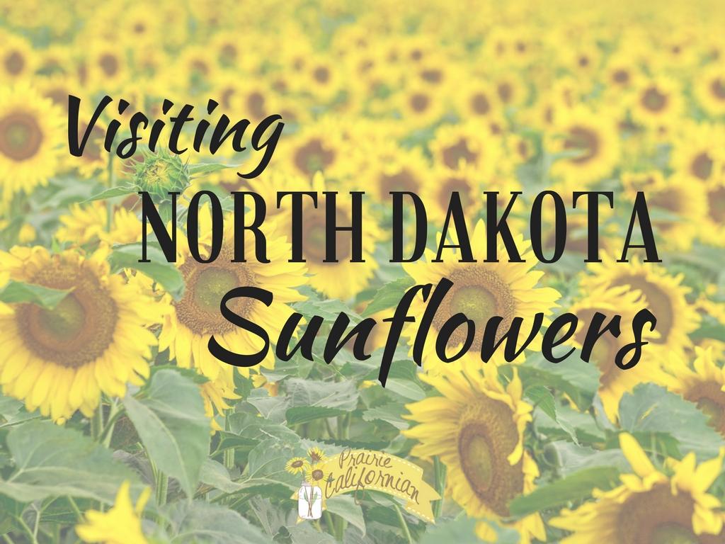 Visiting North Dakota Sunflowers