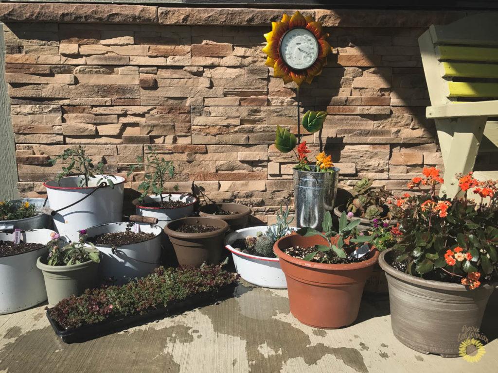 garden 2017: planting & update -